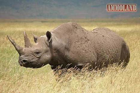 Rhino Permit to be Auctioned at Dallas Safari Club Convention | What's Happening to Africa's Rhino? | Scoop.it