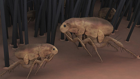 Official: Fleas in Arizona testing positive for plague | News You Can Use - NO PINKSLIME | Scoop.it