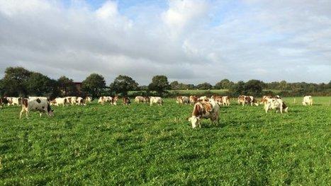 Vendée : ces agriculteurs qui passent au bio - France 3 Pays de la Loire | Agriculture | Scoop.it