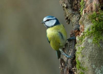 Un tiers des espèces oiseaux nicheurs menacées en France - L'Humanité | Graines de doc | Scoop.it