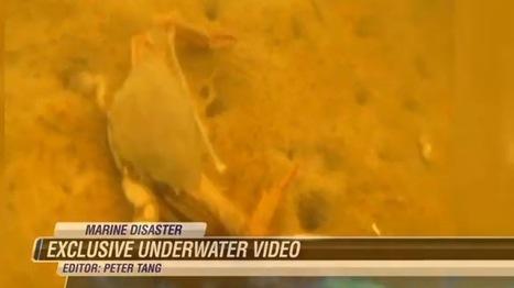 Massive Molasses Spill Devastates Honolulu Marine Life  : NPR | Oil Spill | Scoop.it