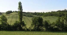 Les vertus de la biomasse : agroforesterie et couverts végétaux | agroforesterie, agroecologie | Scoop.it