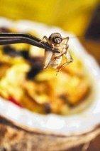 Insectos que sazonan sus platillos - Estilos de Vida - elfinancierocr.com | Entomophagy: Edible Insects and the Future of Food | Scoop.it