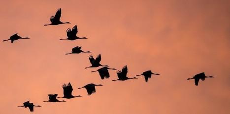 Comment la biodiversité peut-elle s'adapter au dérèglement climatique ? | Biodiversité & Relations Homme - Nature - Environnement : Un Scoop.it du Muséum de Toulouse | Scoop.it