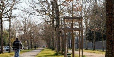 Pau : c'est la saison des plantations d'arbres   Les colocs du jardin   Scoop.it