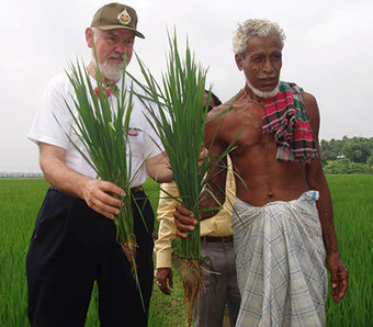 System of Rice Intensification earns food security prize   Food Security   Scoop.it