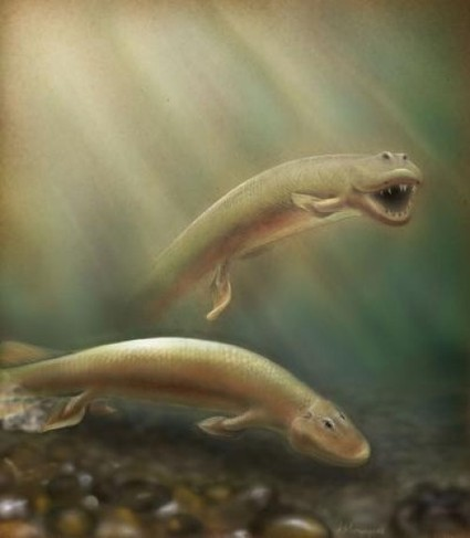 375 million-year-old Fish Fossil Sheds Light on Evolution From Fins to Limbs | Geology | Scoop.it
