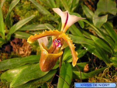 Photos d'Orchidées exotiques non identifiées - Expositions d'Orchidées - Jolie orchidée | actualité floral | Scoop.it