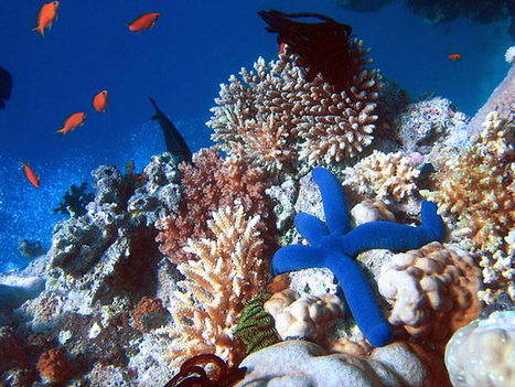 La 1 ere zone de protection marine au Cambodge ! | Blue world news | Scoop.it