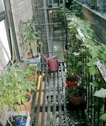 p4r :: permaculture for renters || | Local Economy in Action | Scoop.it