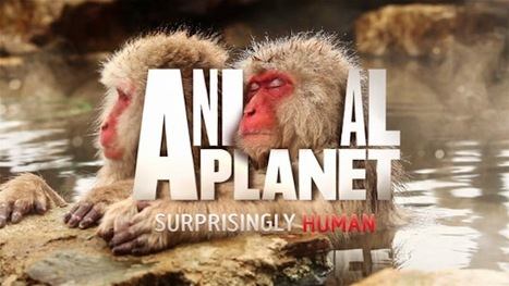 'Animal Planet' TV Channel Gets A New Logo | Corporate Identity | Scoop.it