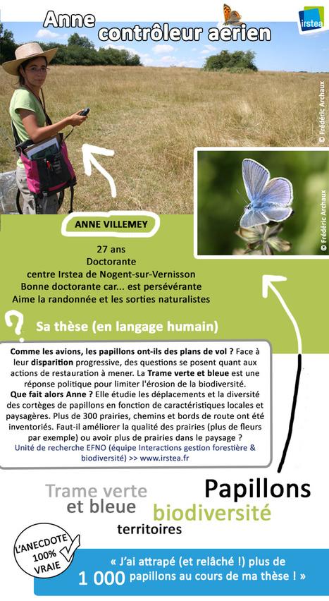 Papillons menacés, biodiversité en danger   Irstea   Environnement actus   Scoop.it