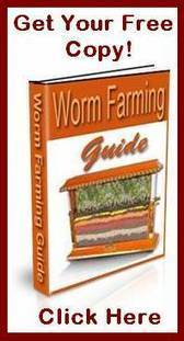 How To Build A Worm Farm | How to Start a Worm Farming | Worm Farming Business | Organic Farming | Scoop.it