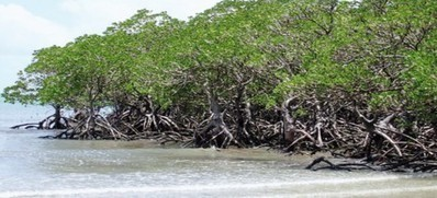 Death being spelled out for Punjab's mangroves | Pakistan Today ... | Mangroves in Pakistan | Scoop.it