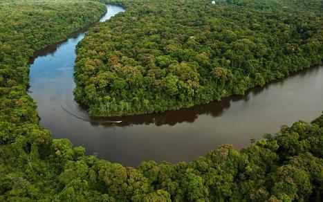 """Protection of Amazon's biodiversity could fuel """"fourth industrial revolution"""" – study 