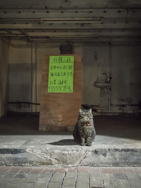 Photographer Documents The Secret Lives Of Cats Living in Hong Kong's Stores (12+ Pics) | Street Art | Scoop.it