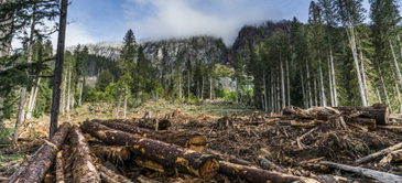 Republicans Want to Open Up Millions of Acres of Public Lands to Logging and Mining | Idaho Politics | Scoop.it