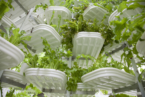 Vertical Farm In Pennsylvania To Be The World's Largest | Wellington Aquaponics | Scoop.it