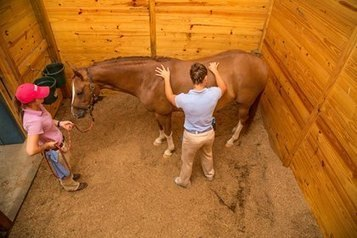 Complementary Medicine: On the Rise - TheHorse.com | Horse Kinetics | Scoop.it