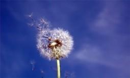 Alergias: consejos para encontrarse mejor - Salud Nutrición Bienestar | Alimentos y Tecnología | Scoop.it
