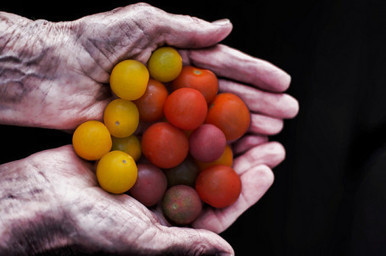The Question of Real Food: Does it Really Matter What You Eat? | nutrition | Scoop.it