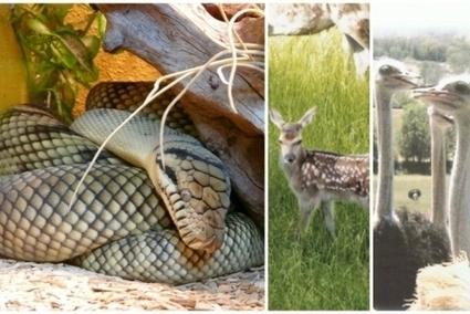Aveyron : découvrez 8 parcs animaliers à croquer ! | L'info tourisme en Aveyron | Scoop.it