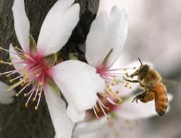 Bees to have their day in court over insecticide use - environment - 22 March 2013 - New Scientist | Bees - UK and Worldwide | Scoop.it