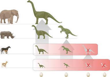 Disparition des dinosaures : leurs oeufs étaient le maillon faible... | Aux origines | Scoop.it