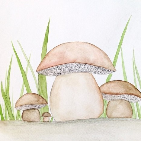 Porcino watercolor | The Porcini Chronicles | Scoop.it