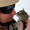 Navy Sailors Bonded with 3 Stowaway Kittens | Feline Health and News - manhattancats.com | Scoop.it