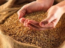 'India's wheat exports may touch record 5 million tonne mark' - The Economic Times | Freight Forwarding from JNPT | Scoop.it