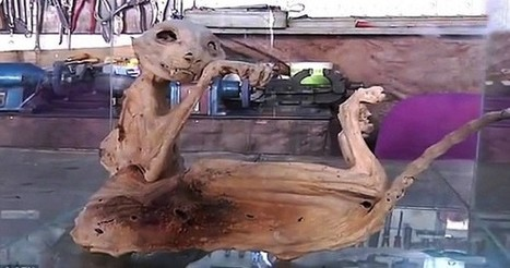 Bizarre Mummified Creature Found in Turkey | Strange days indeed... | Scoop.it