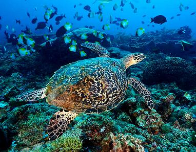 An Amazing Underwater World of Derawan Island in Indonesia   Travel Around The World   Scoop.it