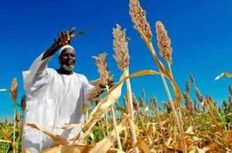 Agroecology in Africa: Mitigation the old new way | The Herald | Agroecology and Sustainable Foods Systems - Agroecologie et Systèmes Alimentaires Durables - ISARA Lyon | Scoop.it