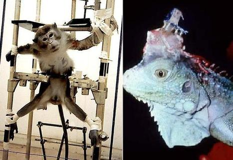 Vivisection - Animal Destiny   Une seule Terre pour tous - Only one Earth for all   Scoop.it