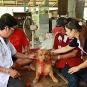 Bangkok: cane-eroe trova una neonata in un sacchetto e le salva la ... | Oltre il Cuore di Lucilla News | Scoop.it