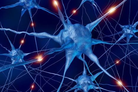 Neurones involved in everyday memories identified | Learning & Mind & Brain | Scoop.it