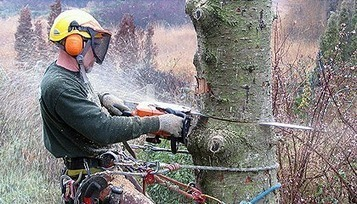 Tree Removal | (202) 350-2211 | DC Tree Service | The Best Tree removal service in Decatur, GA | Scoop.it