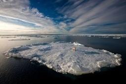International Polar Bear Day - in pictures   GarryRogers Biosphere News   Scoop.it