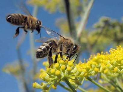 Neonicotinoids are poisoning entire farmland ecosystems | Ancient Wisdom | Scoop.it