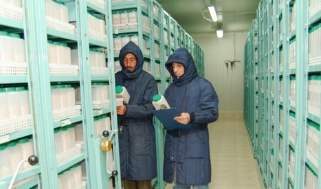 In war-torn Syria, a priceless seed vault continues to hang on - PRI | Agricultural Biodiversity | Scoop.it