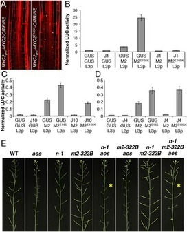 Multilayered Organization of Jasmonate Signalling in the Regulation of Root Growth | Emerging Research in Plant Cell Biology | Scoop.it