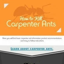 How to Kill Carpenter Ants | Visual.ly | Ants Infographics | Scoop.it