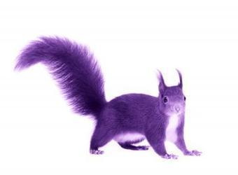 How to find a purple squirrel | Business Excellence Magazine | Attitude Makes The Difference | Scoop.it