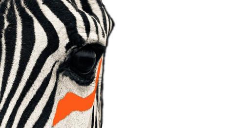 About Zebra Strategies | Ethnic Marketing Research Company | Marketing Research Company New York | Scoop.it