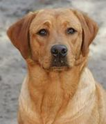 Young-Spirits | Labrador Ammerland | Scoop.it
