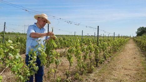Les vignerons européens en colère | Alimentation, agriculture, bio | Scoop.it