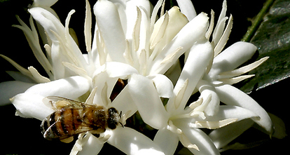 The Buzz on Bees   TIME For Kids   Shared Readings   Scoop.it