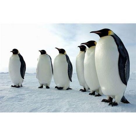 Penguin 3.0 a été lancé ce week-end ! - Actualité Abondance | Référencement sur les moteurs de recherche (SEO) : Google, Yahoo, Bing... | Scoop.it