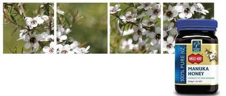 Mgo Manuka Honey Scientific Research | Manuka Honey | Scoop.it